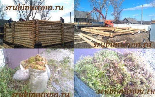 Купить мох строительный
